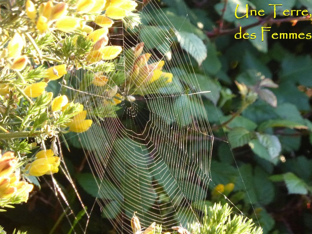 nature-araignée-lght-texte