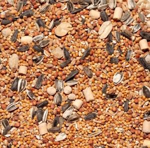 graines (1)