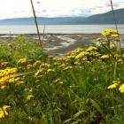 FÉMININ SACRÉ: Sagesse Féminine inspirée de la Nature – INFINITUDE de la nature !