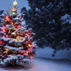La période des fêtes…une réjouissance ? L'ombre et la lumière se rencontrent !